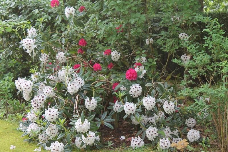 les jardins sont beaux en mai ! - Page 2 _copie10