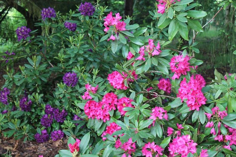les jardins sont beaux en mai ! - Page 2 _copie11