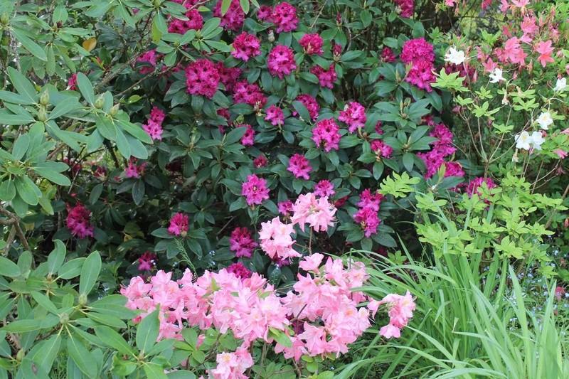les jardins sont beaux en mai ! - Page 2 _copie14