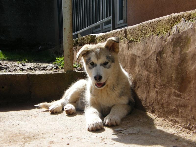 Nos loups grandissent, postez nous vos photos - Page 5 Dscf5010