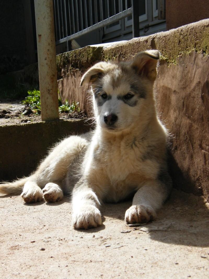 Nos loups grandissent, postez nous vos photos - Page 5 Dscf5011
