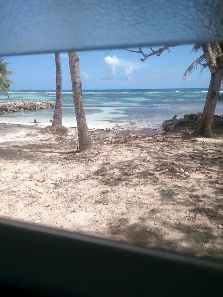 La peste brune de retour aux Antilles Image64
