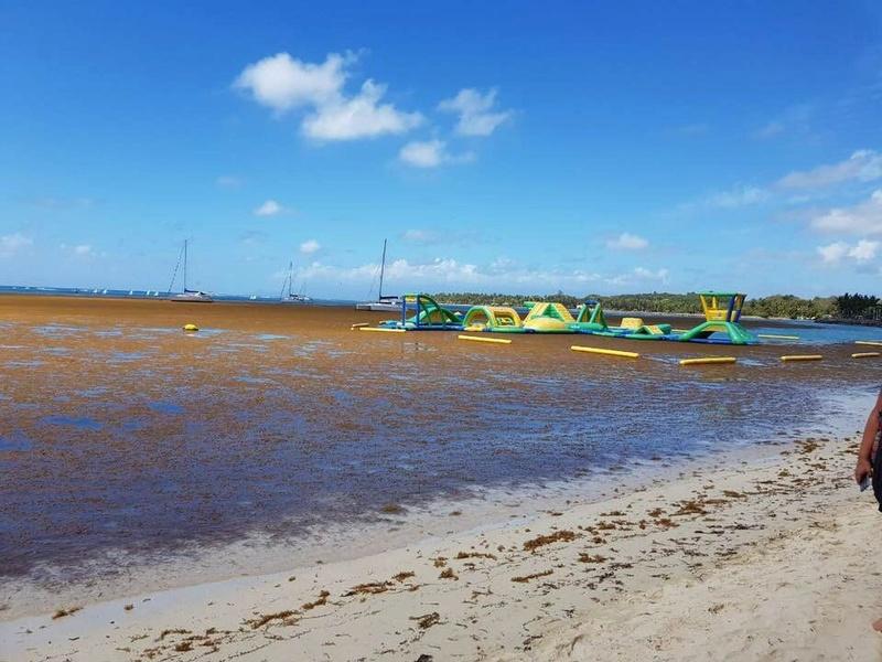 La peste brune de retour aux Antilles Image66