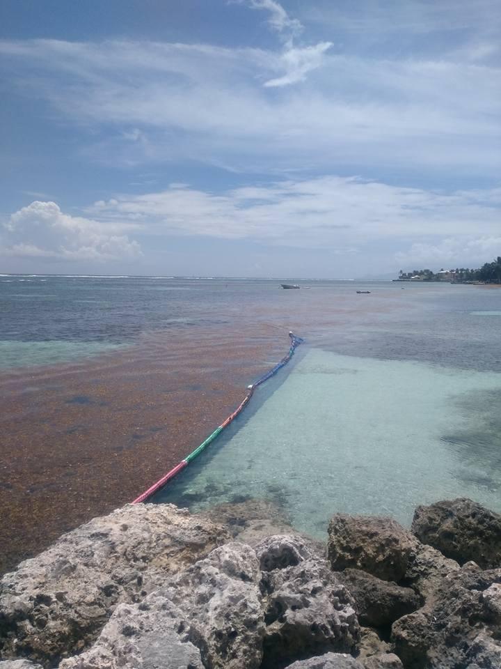 La peste brune de retour aux Antilles Image67
