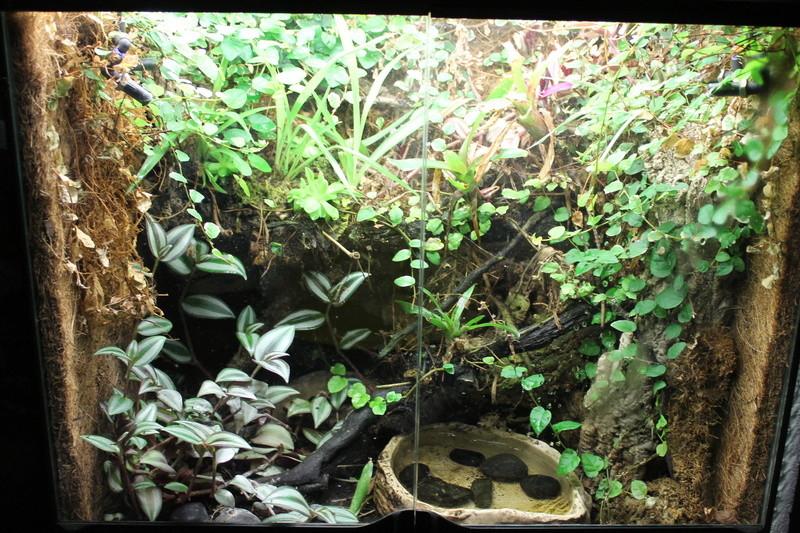 Aménagement d'un palu en terra à phelsuma  Img_3610