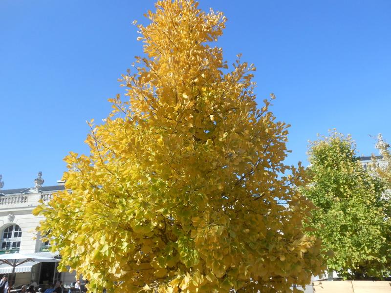 couleurs d'automne - Page 9 Dscn7211