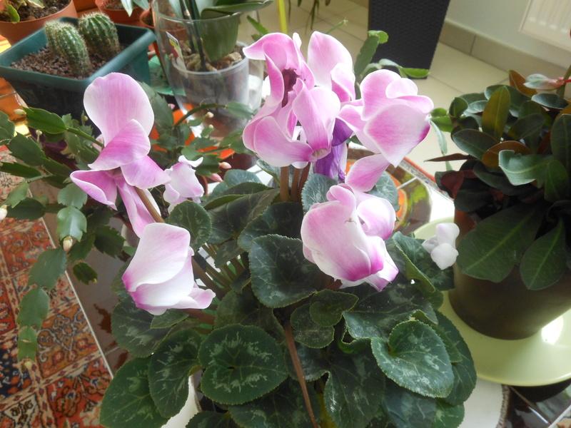Floraisons d'intérieur  - Page 6 Dscn7313