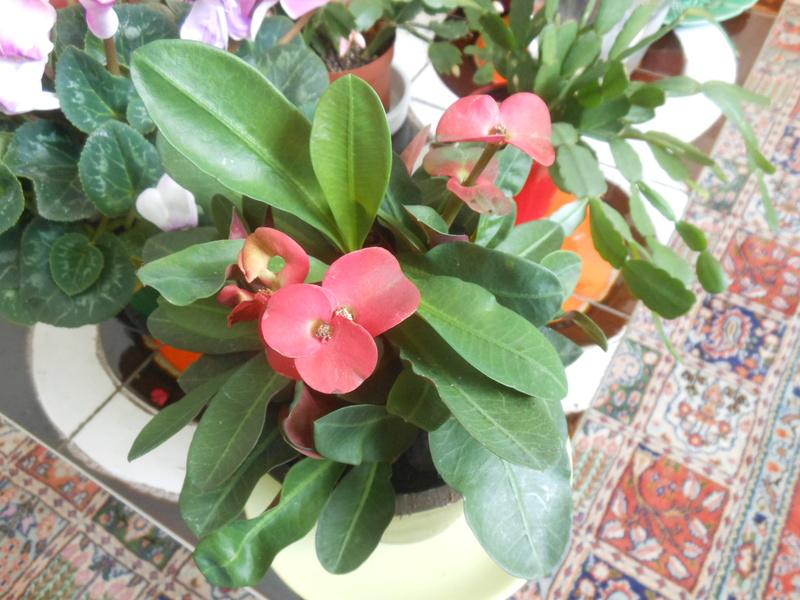 Floraisons d'intérieur  - Page 6 Dscn7315