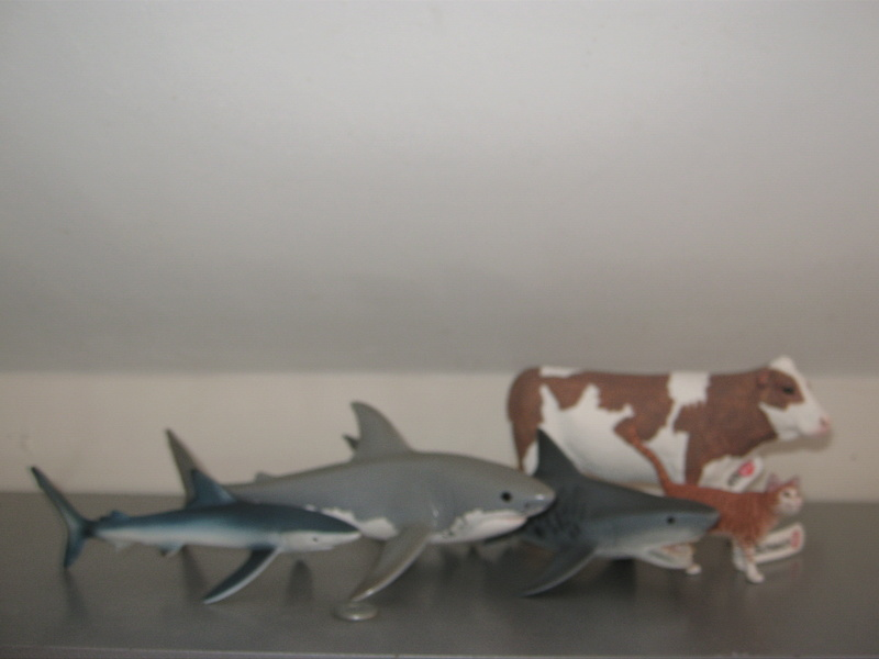 Taos' Schleich Additions 3/8/2020 Img_6211