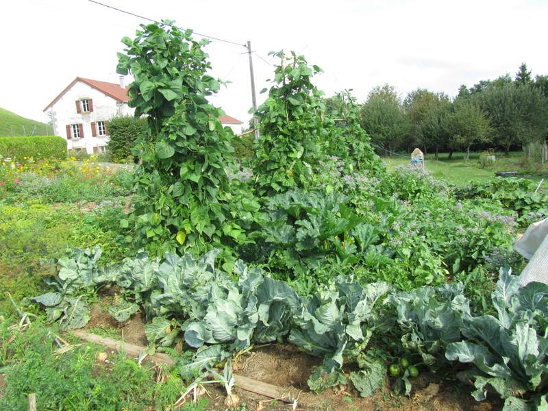 Pesticides dans les fruits et légumes: allez-vous privilégier le bio? Img_9010