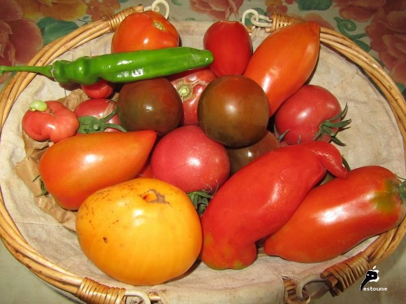 Pesticides dans les fruits et légumes: allez-vous privilégier le bio? Img_9111