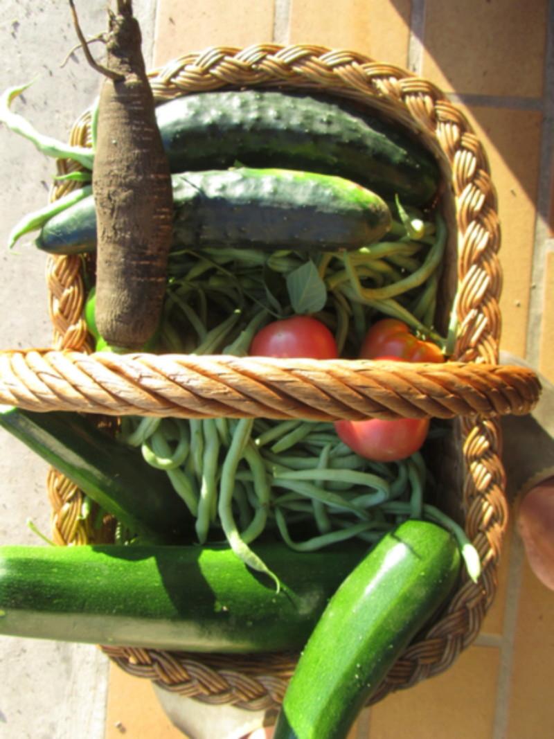 Pesticides dans les fruits et légumes: allez-vous privilégier le bio? Img_9112