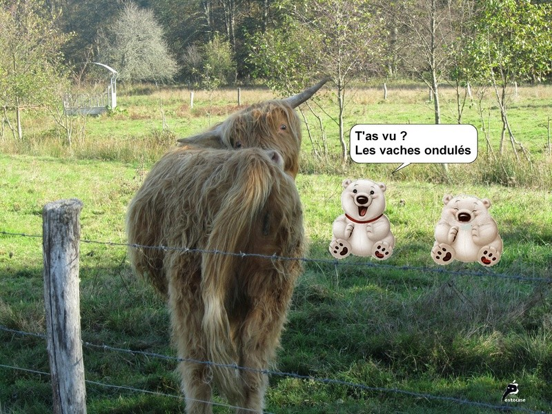Animaux en Images  - Page 5 Vaches10