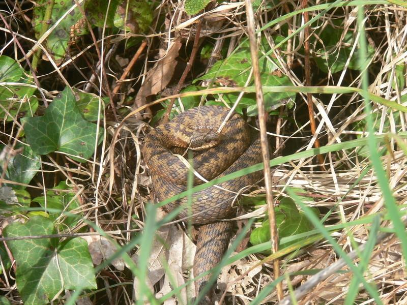 reptiles sur st lunaire P1280810