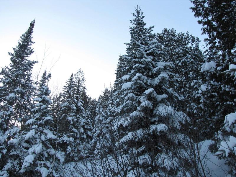 Si ça n'est pas encore l'hiver, ... Img_0210