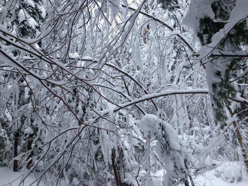 Vive l'hiver Img_3014