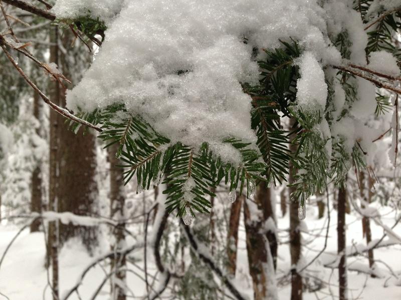 Vive l'hiver Img_3019