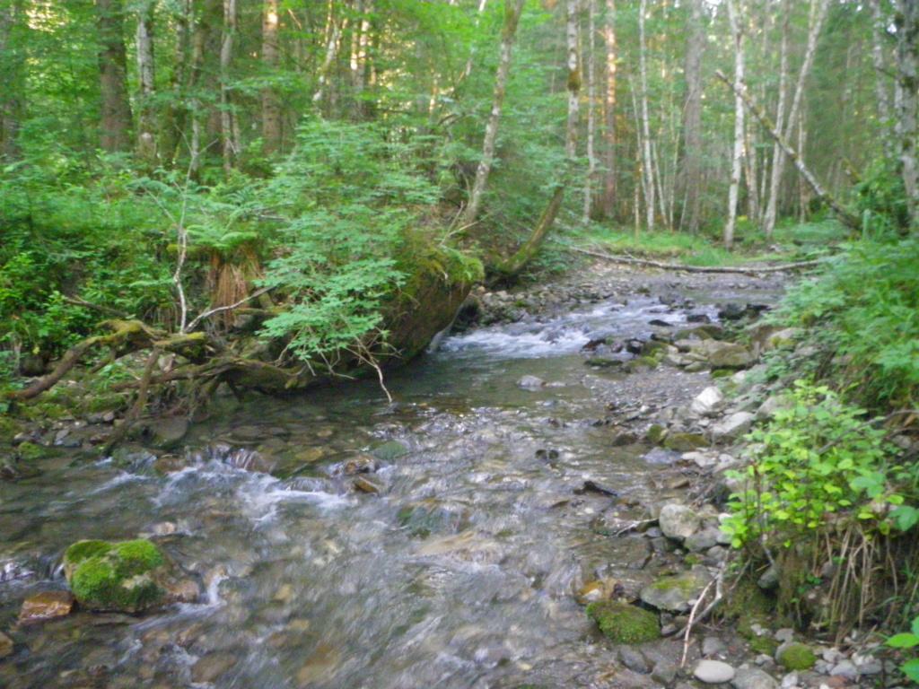 encore un ruisseau Imgp0216