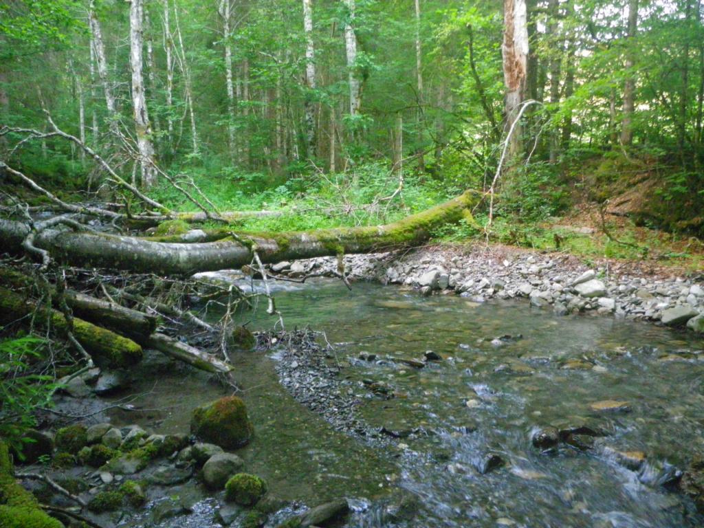 encore un ruisseau Imgp0218