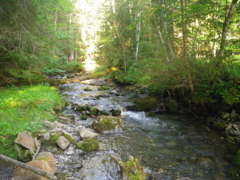 encore un ruisseau Imgp0220