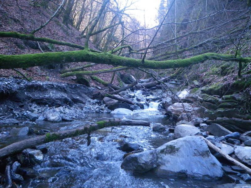 sortie ruisseau Imgp2618