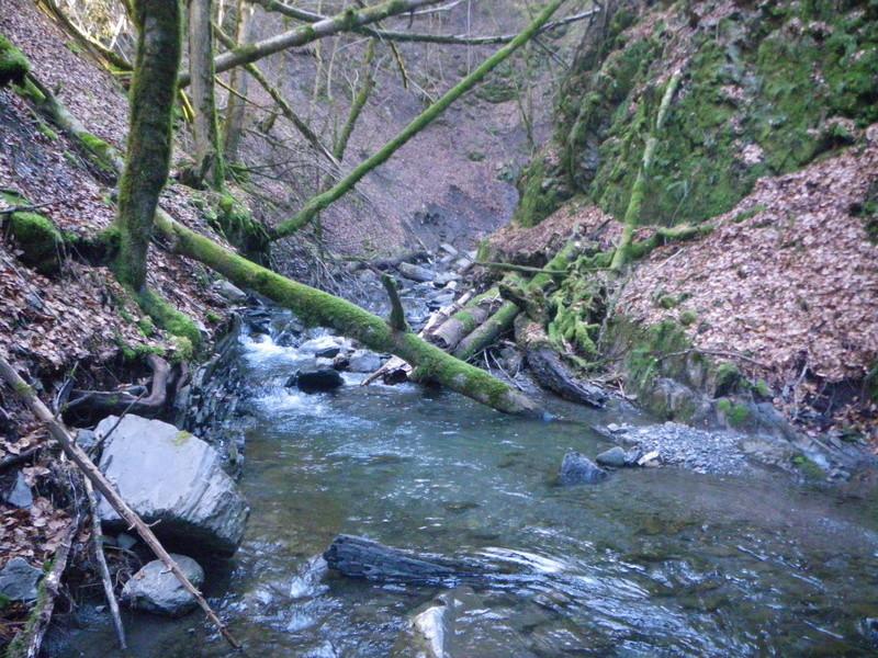sortie ruisseau Imgp2619