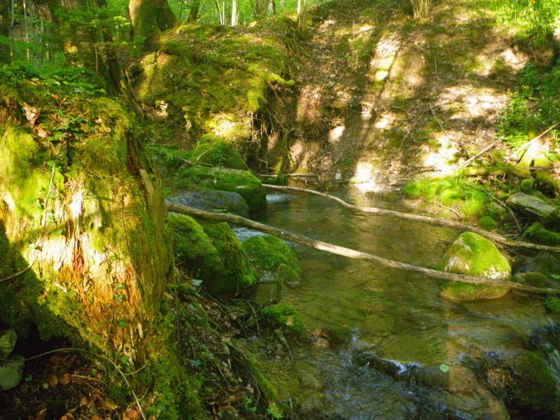 encore un petit tour en ruisseau Imgp2718