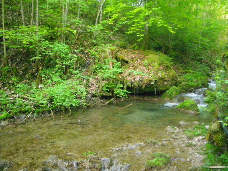 encore un petit tour en ruisseau Imgp2719
