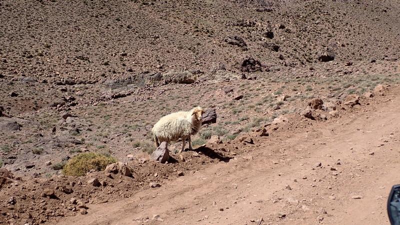 La traversée du Djebel Saghro n'est plus une piste ... P3300112