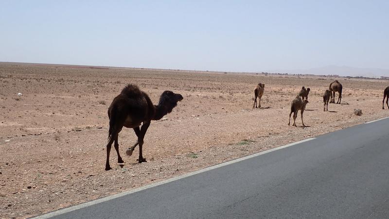La traversée du Djebel Saghro n'est plus une piste ... P3300113