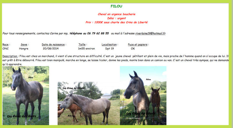 Dept19-3 ans- FILOU- ONC- sauvé par Maïté24 !!!! (decembre 2017) Captur13