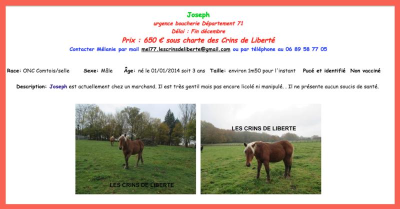 (Dept 71) 3 ans - JOSEPH - ONC Comtois/selle - Réservé par la famille Gondeaux (2017) Captur17
