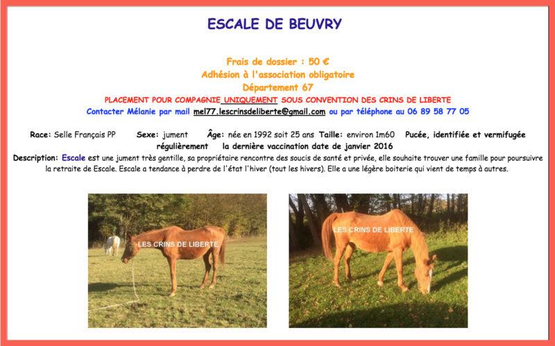 (Dept 67) 25 ans- ESCALE DE BEUVRY -SF- Jument - contact mel77 Captur35