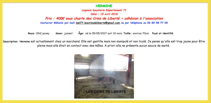 (dept 71) GAMIN & HERMINE - onc poney - sauvés par Céline (avril 2018) Captur81