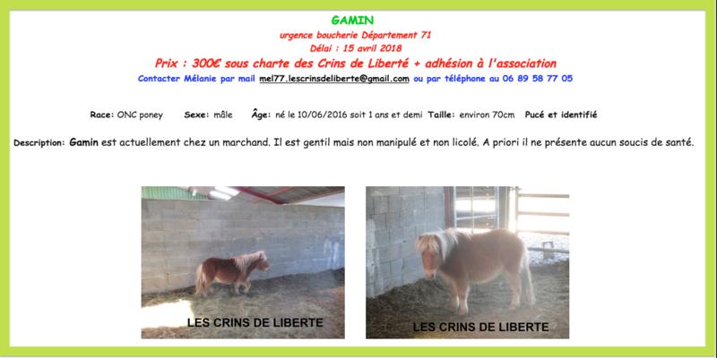 (dept 71) GAMIN & HERMINE - onc poney - sauvés par Céline (avril 2018) Captur82