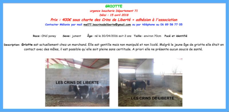 (dept 71) 2 ans - GRIOTTE - onc poney - jument -Réservée par Victoire B (mars 2018) Captur83