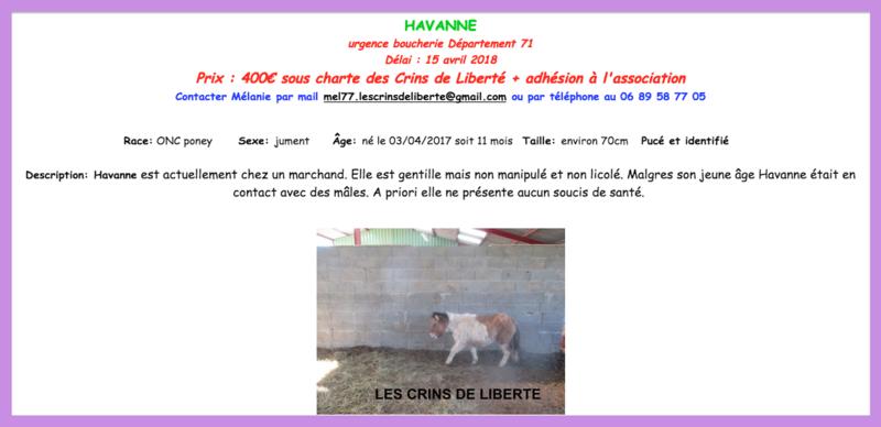 (dept 71) - 11 mois - HAVANNE - onc poney - jument - Nathalie R. (mars 2018) Captur84