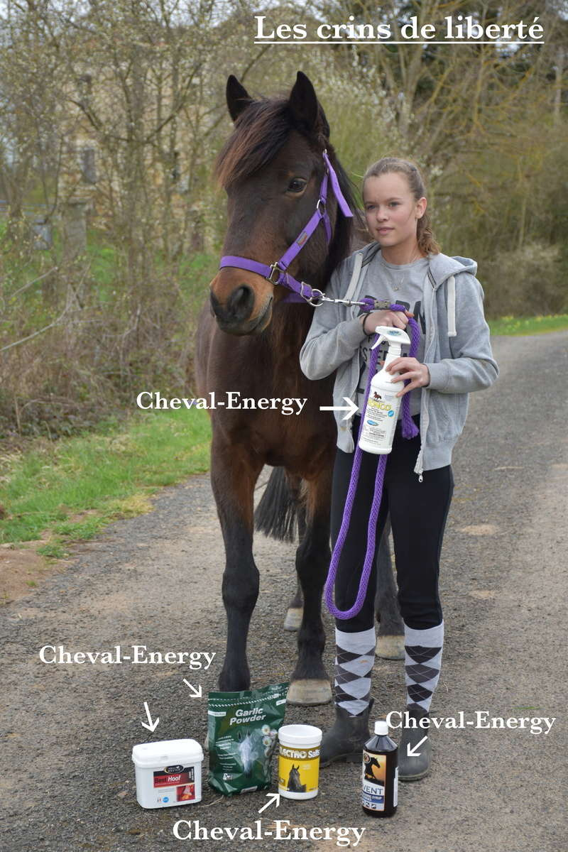 Cheval-Energy Dsc_0445