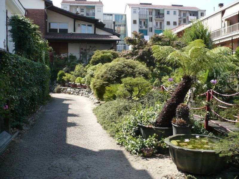 Per gli amanti del bonsai........ P1010413