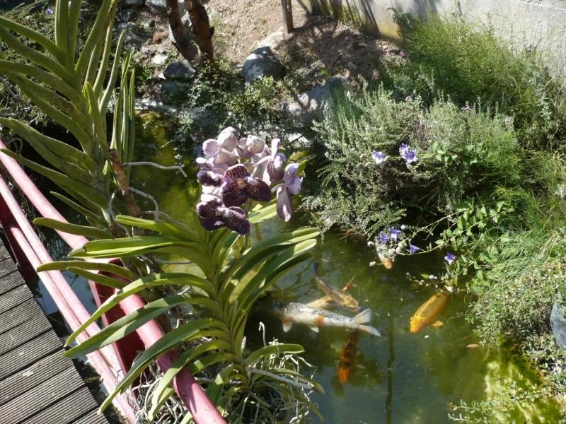 Per gli amanti del bonsai........ P1010414