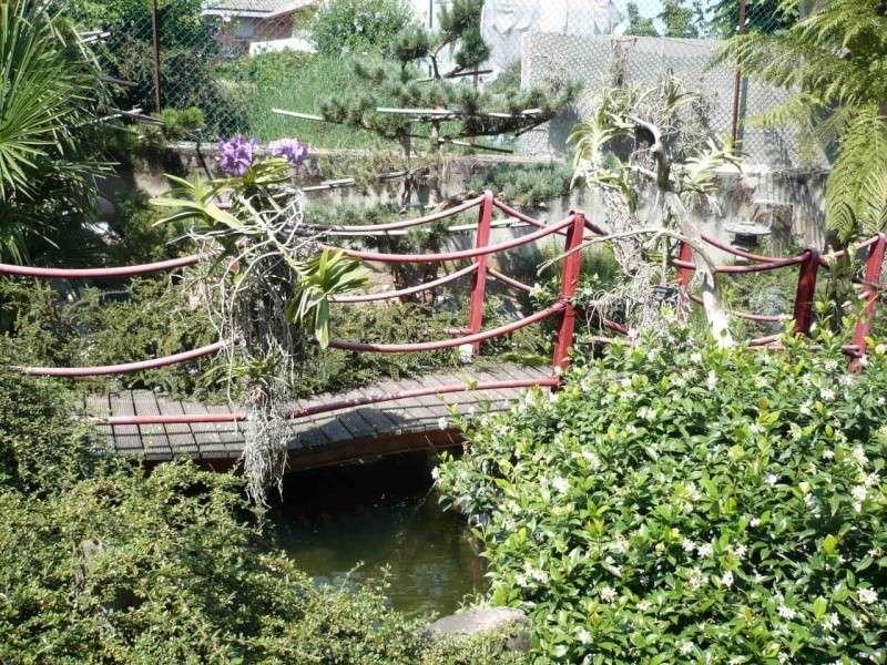 Per gli amanti del bonsai........ P1010415