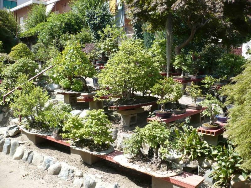 Per gli amanti del bonsai........ P1010416