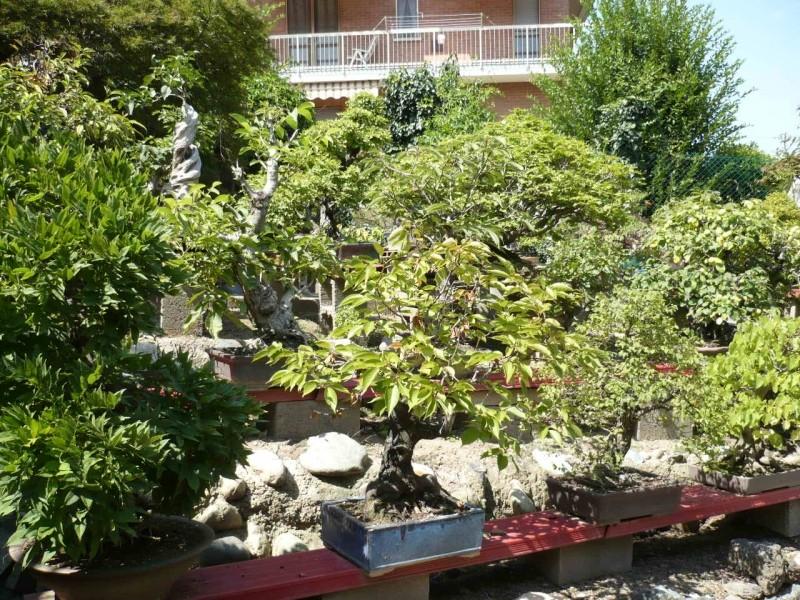 Per gli amanti del bonsai........ P1010417