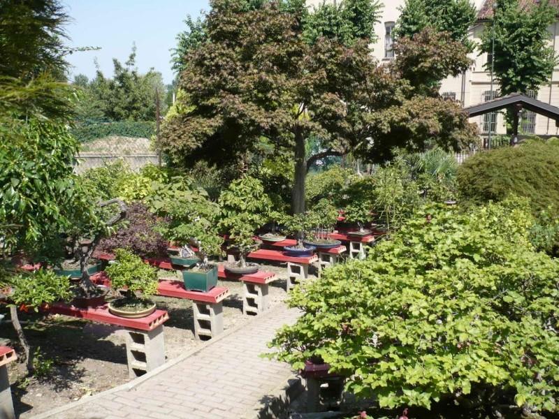 Per gli amanti del bonsai........ P1010419