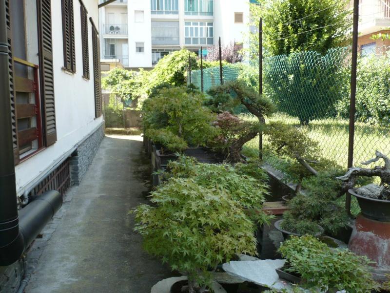 Per gli amanti del bonsai........ P1010420