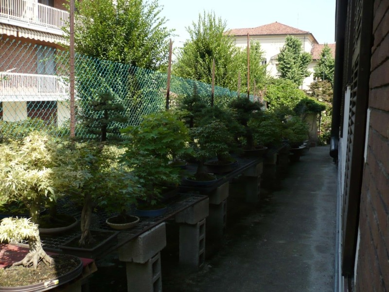 Per gli amanti del bonsai........ P1010421