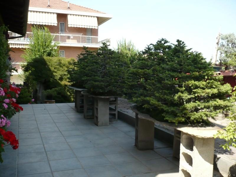 Per gli amanti del bonsai........ P1010423