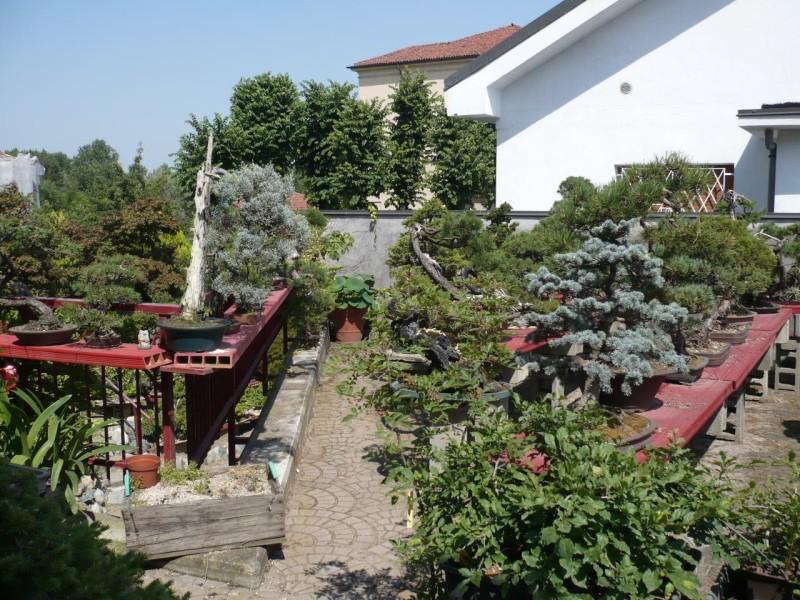 Per gli amanti del bonsai........ P1010425