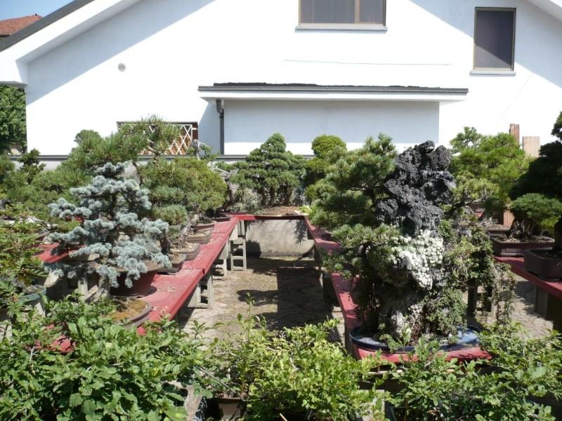 Per gli amanti del bonsai........ P1010426