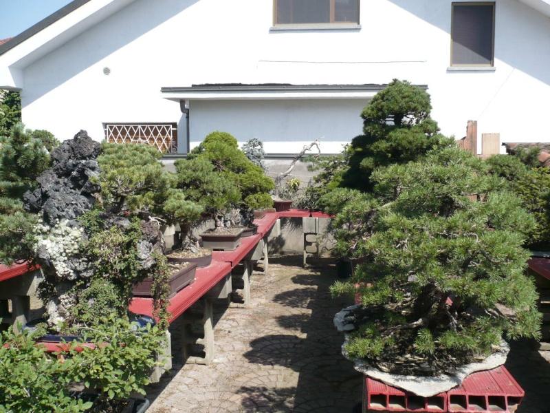 Per gli amanti del bonsai........ P1010427